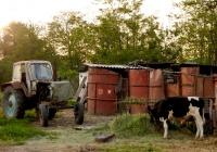 Трактор ЮМЗ-6*, используемый в подсобном хозяйстве. Краснодарский край, Тихорецкий район, станица Новоромановская