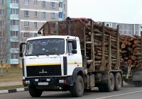 МАЗ-6303 #Н 623 АУ 32. Беларусь, Могилёвская область, Костюковичи