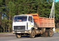Самосвал МАЗ-5516*  #АА 6034-6. Беларусь, Могилёвская область, Костюковичи