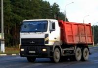 Самосвал МАЗ-6501  #АЕ 3403-6. Беларусь, Могилёвская область, Костюковичи