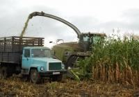 Уборка кукурузы на силос. Белгородская область, Алексеевский район