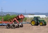 Трактор John Deere 6600 на уборке томатов.. Израиль, Хайфский округ