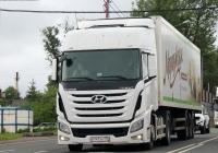 Седельный тягач Hyundai Xcient #В 147 УН 178. Псков, Ленинградское шоссе